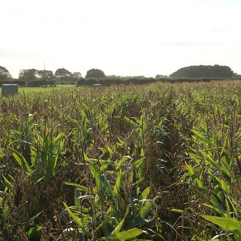 Wind Break Seed Mix (9.5kg per acre)
