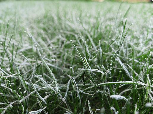 COLDSTART GRASS SEED.jpg