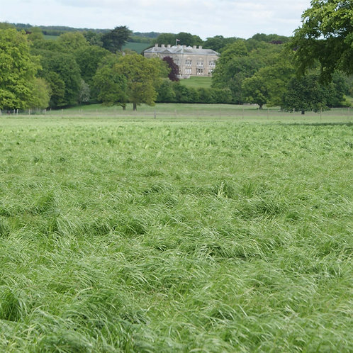 HM.7 Grange Long Term Grass Seed Mix (Acre Pack)