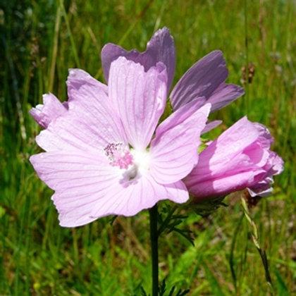 Musk Mallow Wildflower Seed (Malva Moschata)