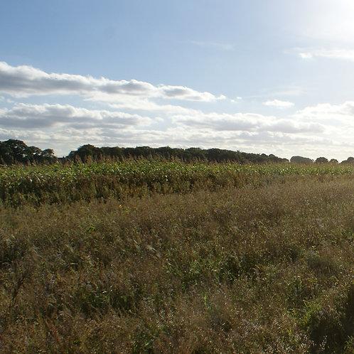 Estate Seed Mix (5kg per acre)