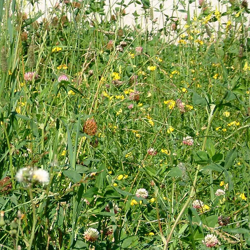 EF4 Pollen & Nectar Seed Mix (8kg per acre)