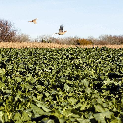 Voltage Kale Seed (2kg per acre)