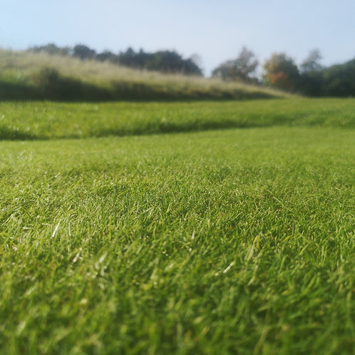 20kg - Divot Mix 2 (Fescue) Grass Seed Mix