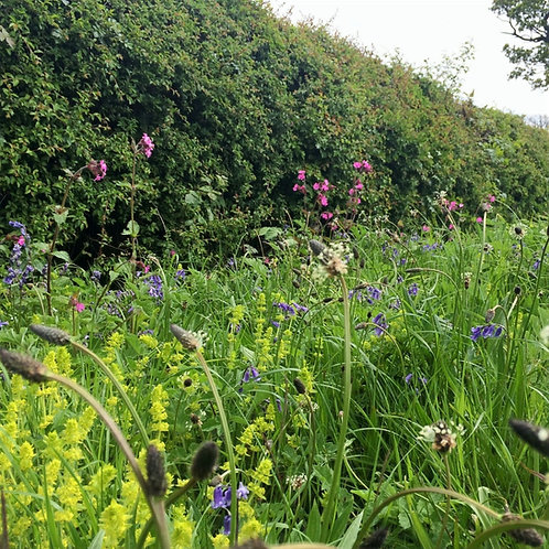 P4 Hedgerows Wildflower Seed Mix 100%