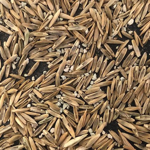 Mycorrhizae Seed Technology - SR2 (Buy 1 item per 20kg bag or acre)
