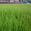 Thumbnail: HM.4 General Amenity / Heavy Duty Grass Seed Mix (HM4)