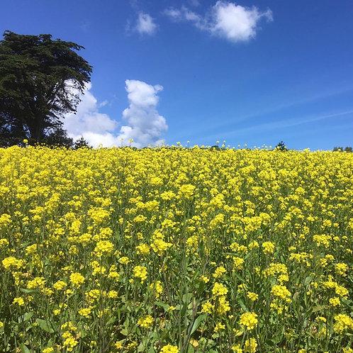 Brown Mustard Seed (2kg per acre) (EFA) (OP1)