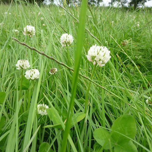 HM.25 Siddington Long Term Dual Purpose Grass Seed Mix (Acre Pack)