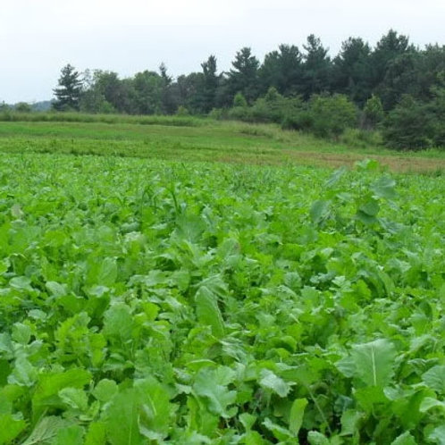 Late Sow - Late Feed (Catch Crop Seed Mix) (2.25kg per acre)