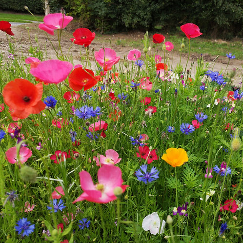 HC1 Annual Etna Wildflower Seed Mix 100%