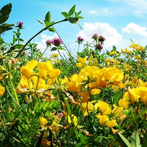 Organic Nectar Flower Seed Mix (5kg per acre)