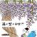 【第35回】 藤の花の秘密