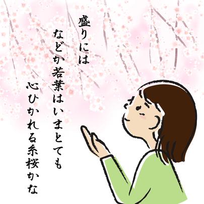 【第33回】 秀郷の子孫の名前がつけられた桜がある!?