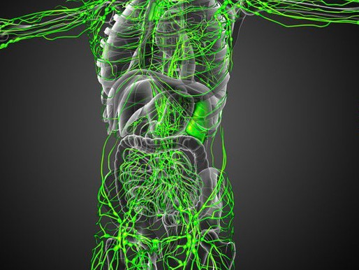 What is the Lymphatic system? And why is it so important?