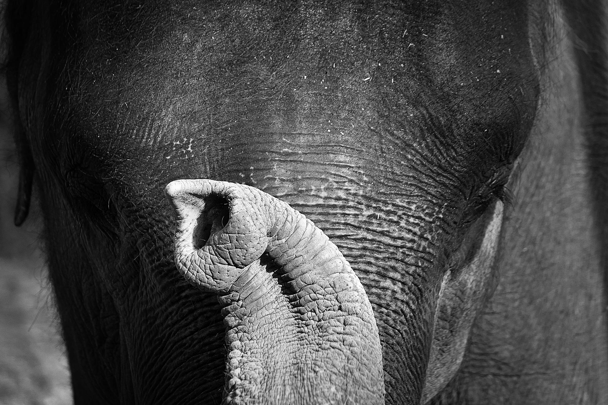 Elephant's Namashkar
