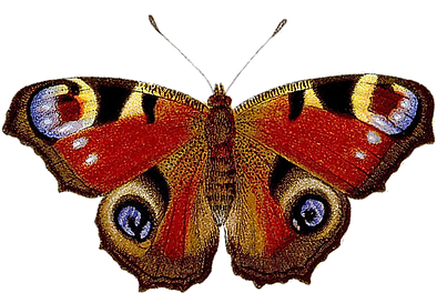 aktanas butterfly.png