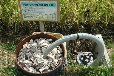 Rice paddy, Sado island, rizière, ile de Sado, Saké Manotsuru, japanese sake, Niiagata.