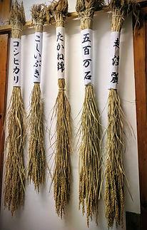 Sakamai, gohyakumangoku, miyamanishiki, yamadanishiki, Koshitanrei, koshiibuki, saké, riz, rice, japanese sake, Genshu