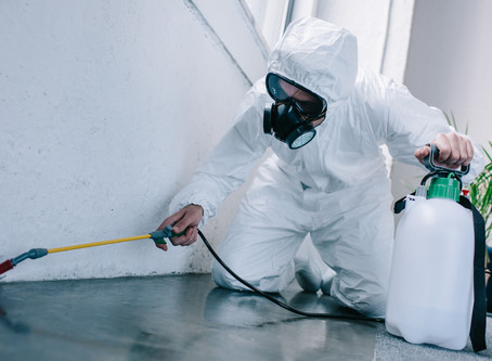 Top Perspectives to Consider When Choosing a Dependable Pest Control Company