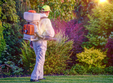 Process Of Finding Affordable Pest Control Services