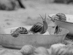 Birth of the Golden Snail