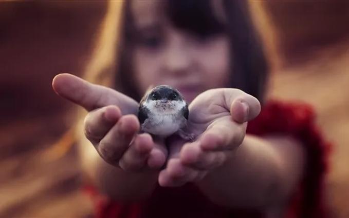 Little-bird-in-hand_m.webp