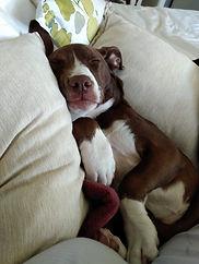 sleepy metta.jpg