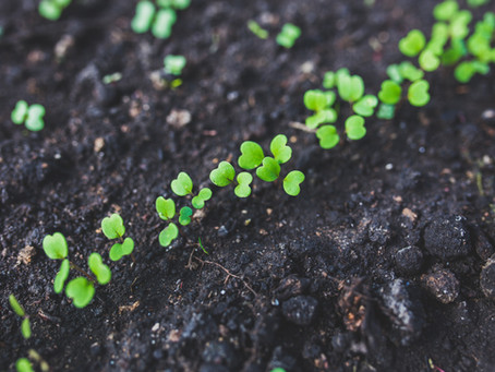 THE REGENERATIVE REVOLUTION: The Impact of Live Microbes On Our Food Supply