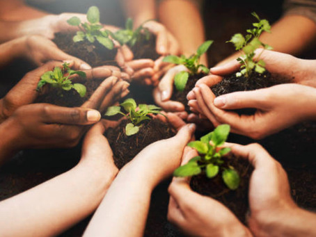 Soil regeneration is the skeleton key that will protect our planet against climate change.