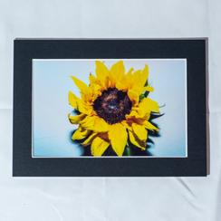 Full Bloom - $10
