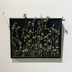 In The Tall Grass - $40