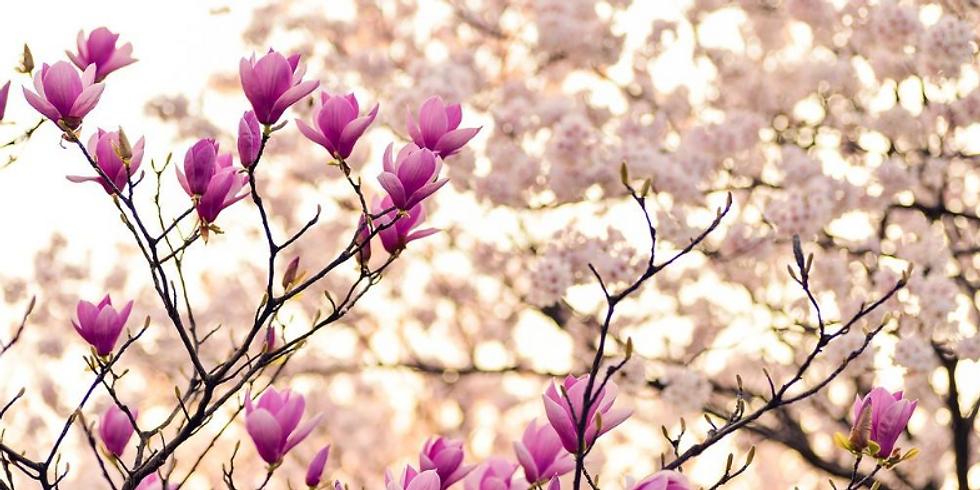 Nutrition and Lifestyle Wellness Series: Breast Cancer w/ Yoko Kato-Bethke