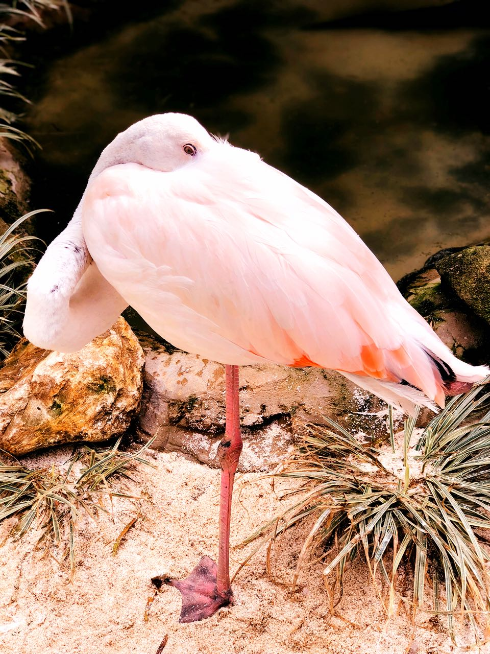 Julia   Flamingo