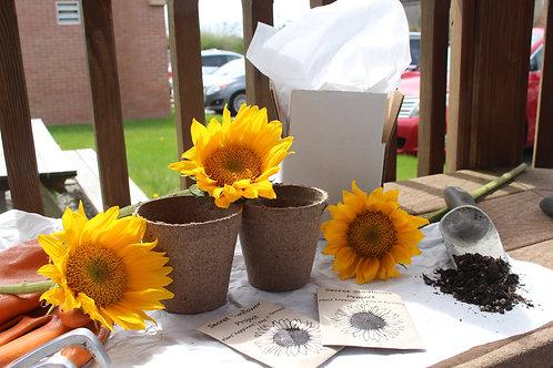 Grow your own Sunflower Kit
