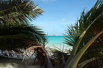 Choose a Salamander Caribbean Sailing Holiday to explore the Caribbean Islands of Antigua, Guadeloupe, Martinique, Bequia, Grenada, the BVI's and so many more, sail in warm azure waters, swim with the turtles, snorkel amazing coral reefs, trek in tropical rainforests, dine in the best restaurants and finish the day with a well-deserved sundowner Call or text +44 (0)7798 524111 or +1 268 722 6298