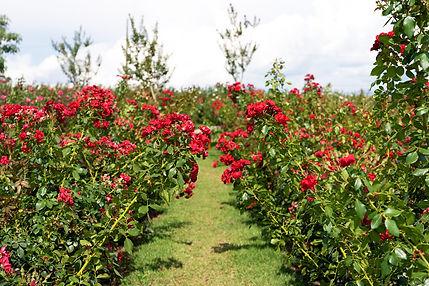 Conecte Flora, Bloemen Park, Holambra, C