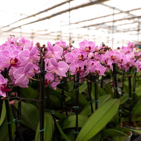 Conheça os melhores fornecedores e eventos de flores em Holambra!