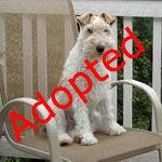 adoptimg1.jpg
