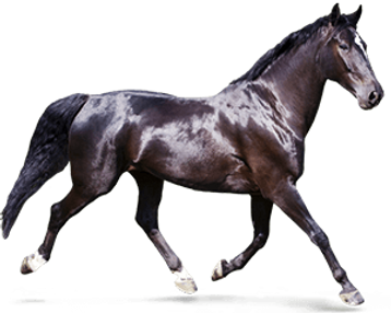 Purina_Horse_LifeStage_ActivePleasure.pn