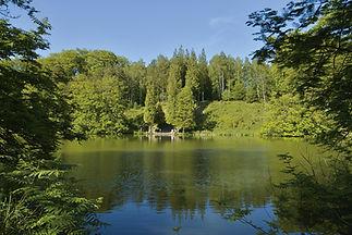 T-LSB_forest.jpg