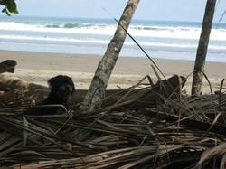 Beachclose