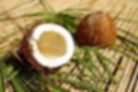 coconut-1501334__340.webp