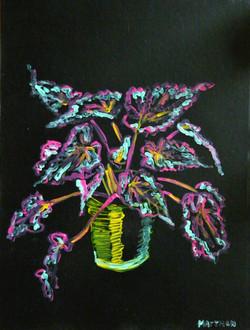 mijn lievelingsplantje