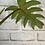 Thumbnail: Philodendron Mayoi #1