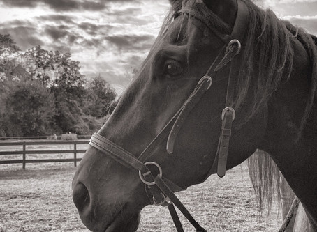 Lessons from a horse about life as we know it right now.