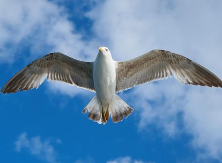 空中での姿勢調節〜自由度と制御力の関係