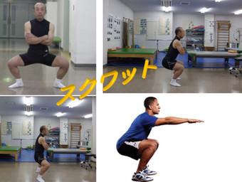 スクワット、シナジー、二関節筋機能