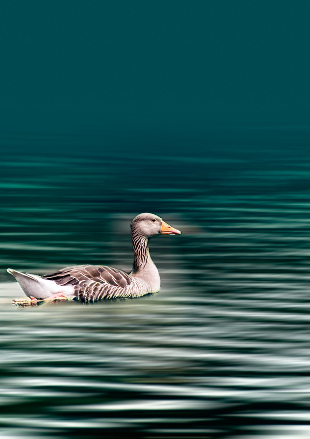 Serenity on the water