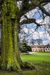 Abbey under a tree.